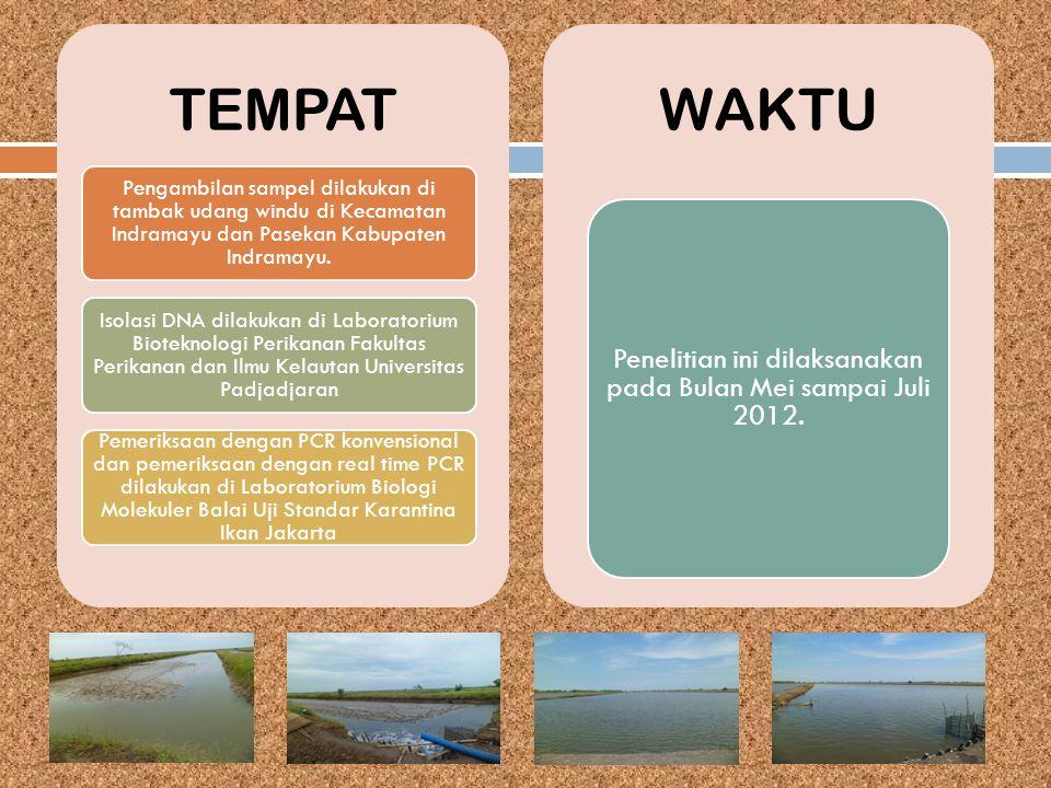 TEMPAT Pengambilan sampel dilakukan di tambak udang windu di Kecamatan Indramayu dan Pasekan Kabupaten Indramayu. Isolasi DNA dilakukan di Laboratoriu