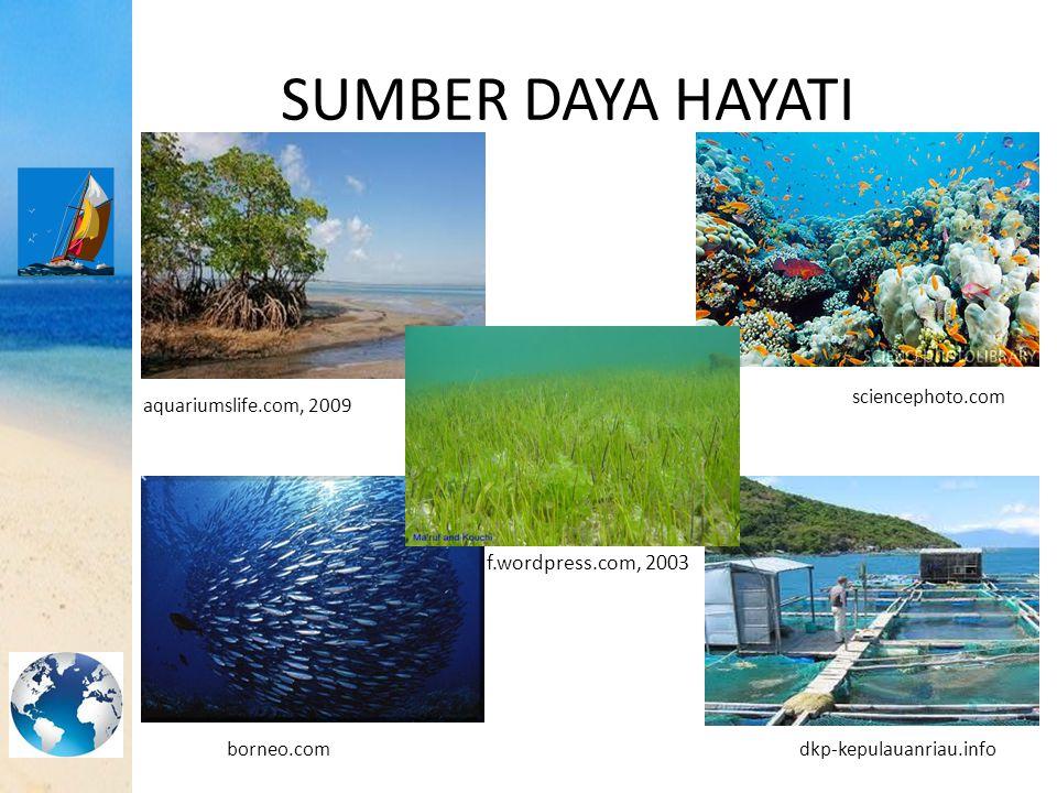 SEISMIK PANTUL DANGKAL Perbedaan Morfologi Dasar Laut Normal dan Terganggu