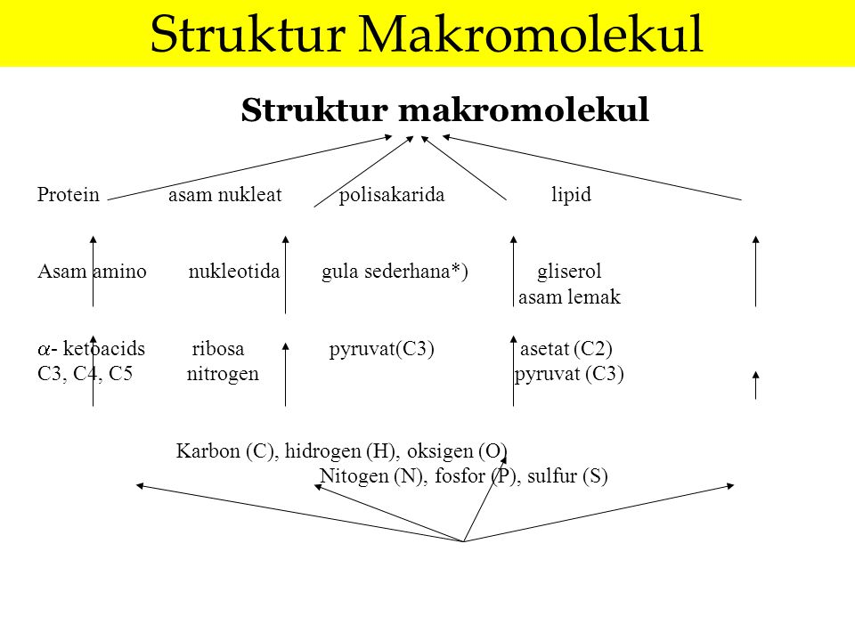 Struktur makromolekul Protein asam nukleat polisakarida lipid Asam amino nukleotida gula sederhana*) gliserol asam lemak  - ketoacids ribosa pyruvat(