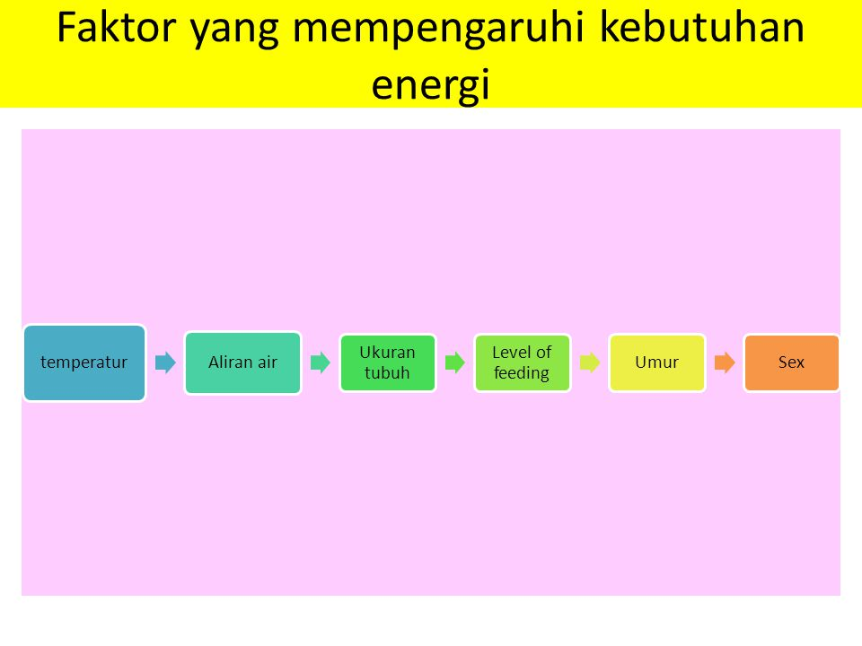 Faktor yang mempengaruhi kebutuhan energi temperatur Aliran air Ukuran tubuh Level of feeding UmurSex
