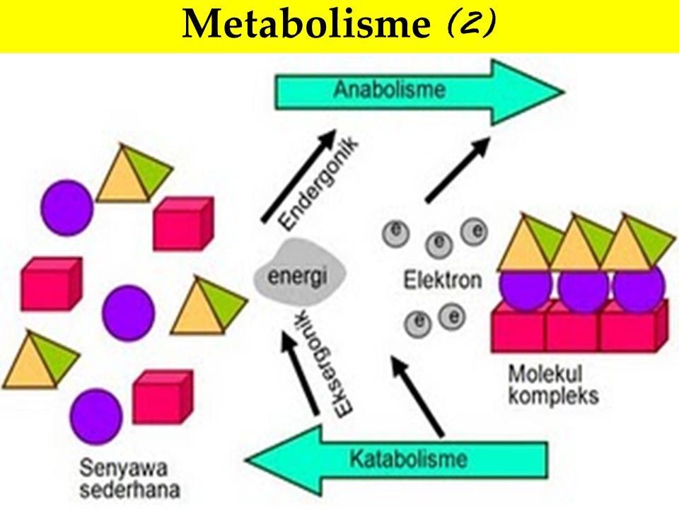 Jalur metabolik dan energi ► Nutrien berenergi biasanya tingkat oksidasinya rendah (bentuk tereduksi).