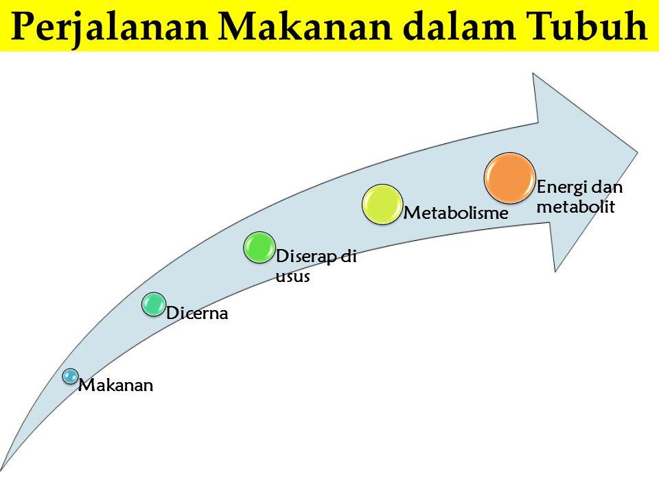 Usus halus: cairan pankreas (tripsin, kimotripsin, karboksipeptidase, amilase, lipase, ribonuklease, deoksiribonuklease, kolesterol esterase); cairan empedu/hati; enzim kelenjar usus (aminopeptidase, dipeptidase, sukrase, mltase, laktase, fosfatase, glukosidase); bakteri usus halus Monosakarida (glukosa, fruktosa, galaktosa) Gliserol, asam lemak, asam fosfat Asam amino Lambung (enzim pepsin, tripsin, lipase dan HCl) Poli/oligo/disakaridaLipid/trigliseridaProtein/polipeptid Mulut (pencernaan mekanik) Poli/oligo/disakaridaLipidProtein/polipeptid Makronutrien KarbohidratLipidProtein Perjalanan Makanan dalam Tubuh