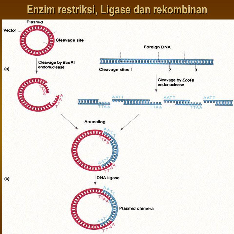 Enzim restriksi, Ligase dan rekombinan
