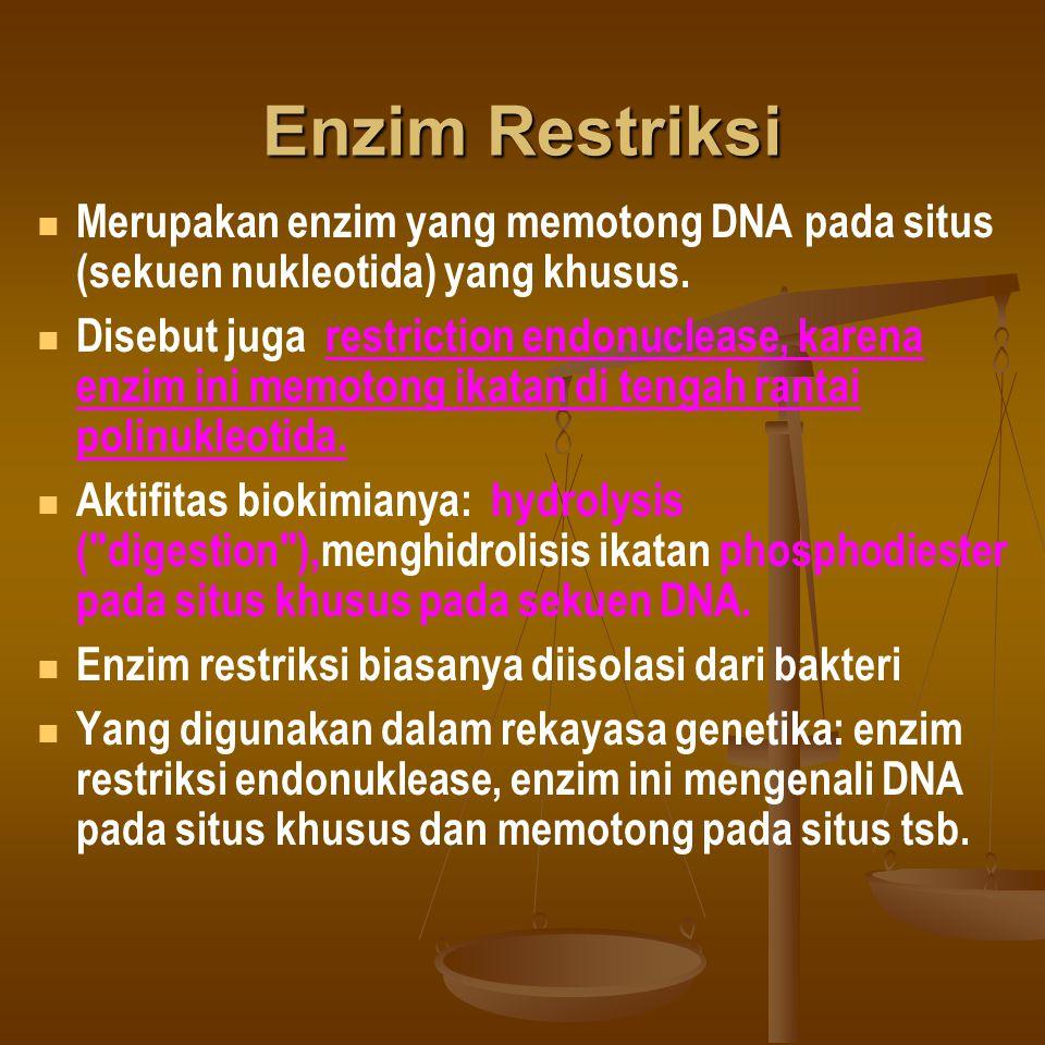 Enzim Restriksi Merupakan enzim yang memotong DNA pada situs (sekuen nukleotida) yang khusus. Disebut juga restriction endonuclease, karena enzim ini