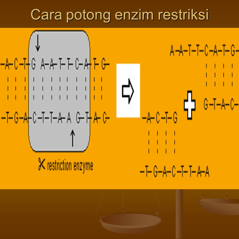 Cara potong enzim restriksi