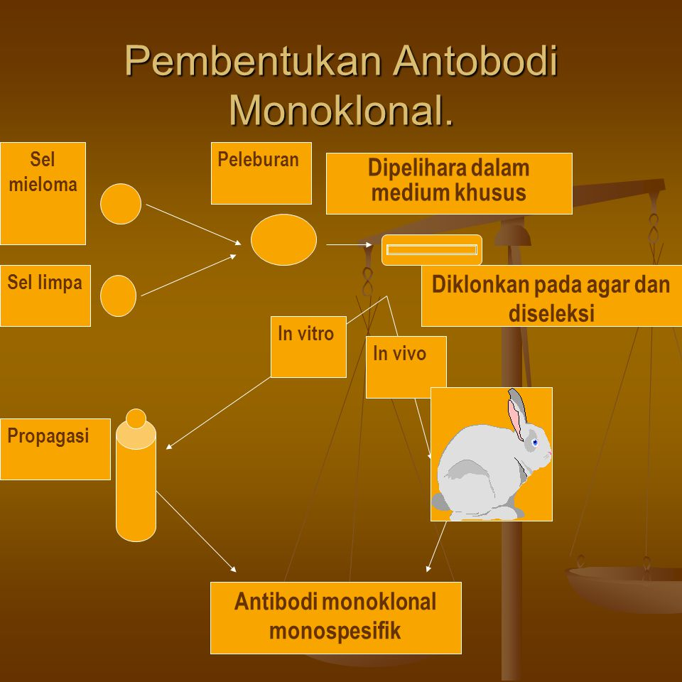 Pembentukan Antobodi Monoklonal. Sel mieloma Sel limpa Peleburan Dipelihara dalam medium khusus Diklonkan pada agar dan diseleksi In vitro In vivo Pro