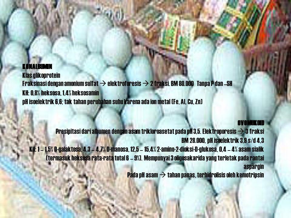 KONALBUMIN Klas glikoprotein Fraksinasi dengan amonium sulfat  elektroforesis  2 fraksi. BM 80.000 Tanpa P dan –SH KH: 0,8% heksosa, 1,4% heksosamin