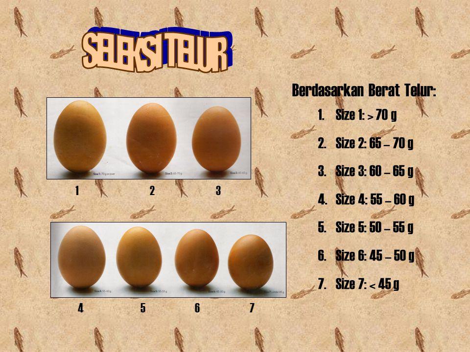 Berdasarkan Berat Telur: 1 2 3 4 5 6 7 1.Size 1: > 70 g 2.Size 2: 65 – 70 g 3.Size 3: 60 – 65 g 4.Size 4: 55 – 60 g 5.Size 5: 50 – 55 g 6.Size 6: 45 –