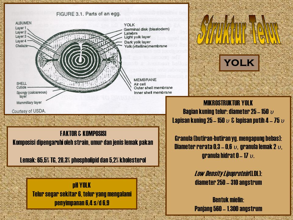 MIKROSTRUKTUR YOLK Bagian kuning telur: diameter 25 – 150  Lapisan kuning 25 – 150  & lapisan putih 4 – 75  Granula (butiran-butiran yg. mengapung