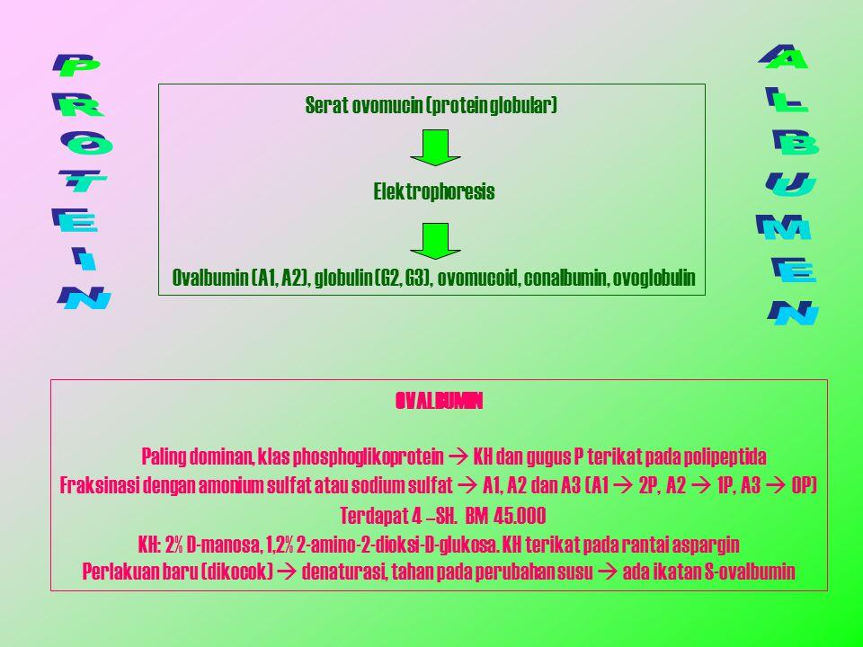 Serat ovomucin (protein globular) Elektrophoresis Ovalbumin (A1, A2), globulin (G2, G3), ovomucoid, conalbumin, ovoglobulin OVALBUMIN Paling dominan,