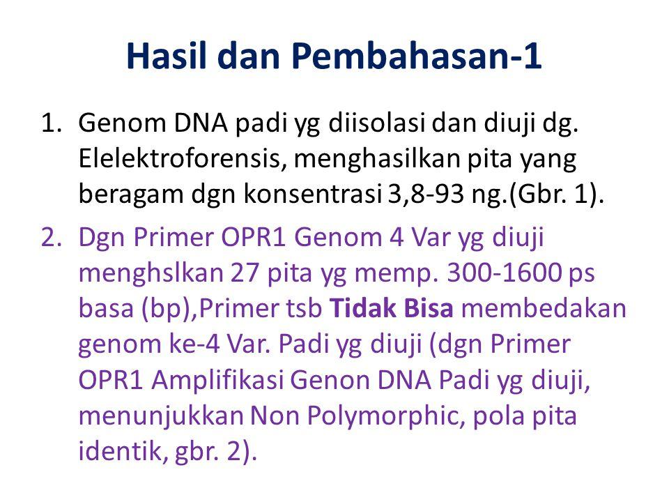 Hasil dan Pembahasan-1 1.Genom DNA padi yg diisolasi dan diuji dg. Elelektroforensis, menghasilkan pita yang beragam dgn konsentrasi 3,8-93 ng.(Gbr. 1