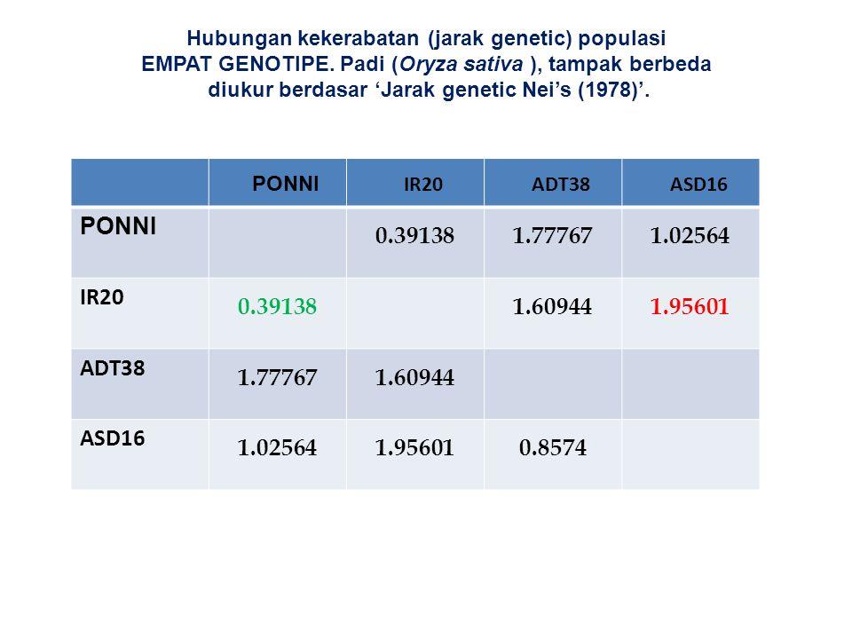 Hubungan kekerabatan (jarak genetic) populasi EMPAT GENOTIPE. Padi (Oryza sativa ), tampak berbeda diukur berdasar 'Jarak genetic Nei's (1978)'. PONNI
