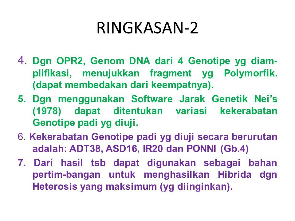 RINGKASAN-2 4. Dgn OPR2, Genom DNA dari 4 Genotipe yg diam- plifikasi, menujukkan fragment yg Polymorfik. (dapat membedakan dari keempatnya). 5. Dgn m