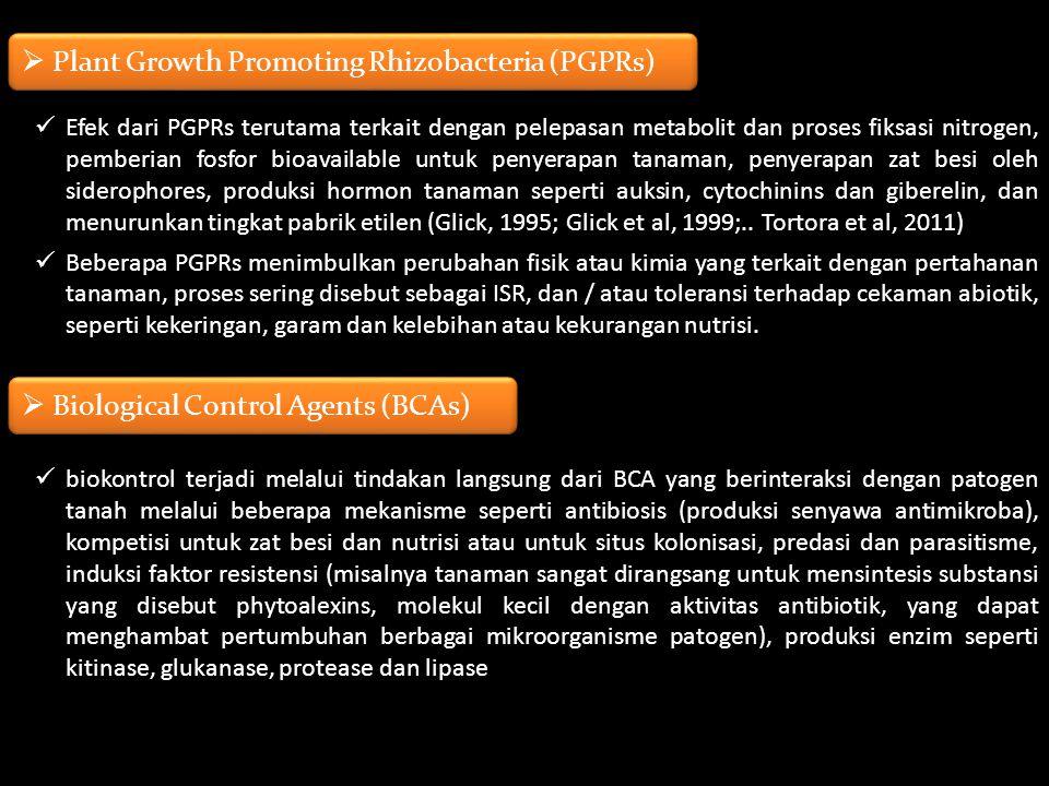 Efek dari PGPRs terutama terkait dengan pelepasan metabolit dan proses fiksasi nitrogen, pemberian fosfor bioavailable untuk penyerapan tanaman, penye