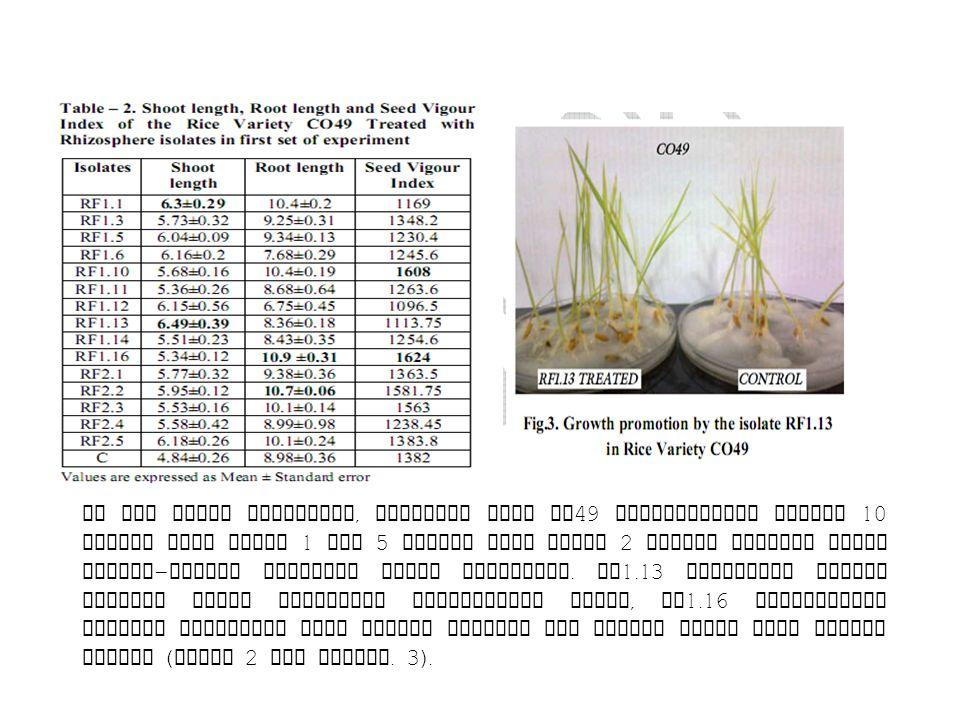 Di set kedua percobaan, varietas padi CO 49 diperlakukan dengan 10 isolat dari Sawah 1 dan 5 isolat dari Sawah 2 dengan kontrol untuk masing - masing