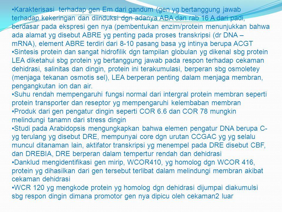 Karakterisasi terhadap gen Em dari gandum (gen yg bertanggung jawab terhadap kekeringan dan diinduksi dgn adanya ABA dan rab 16 A dari padi, berdasar