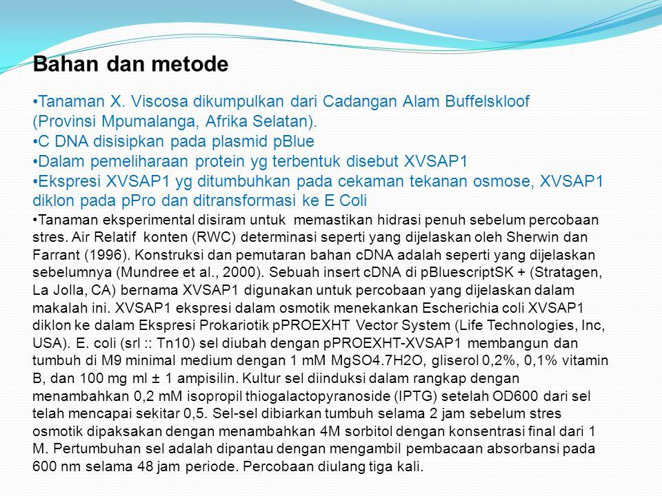 Analisis urutanXVSAP1 (XVSAP1 sequence analysis) Urutan nukleotida dari XVSAP1 ditentukan dengan menggunakan sequen DNA ALFexpress Urutan nukleotida dan perbandingan asam amino dilakukan dengan menggunakan Clustal W.untuk menkonstruksi pakai DNAMAN digunakan untuk membangun pohon homologi.