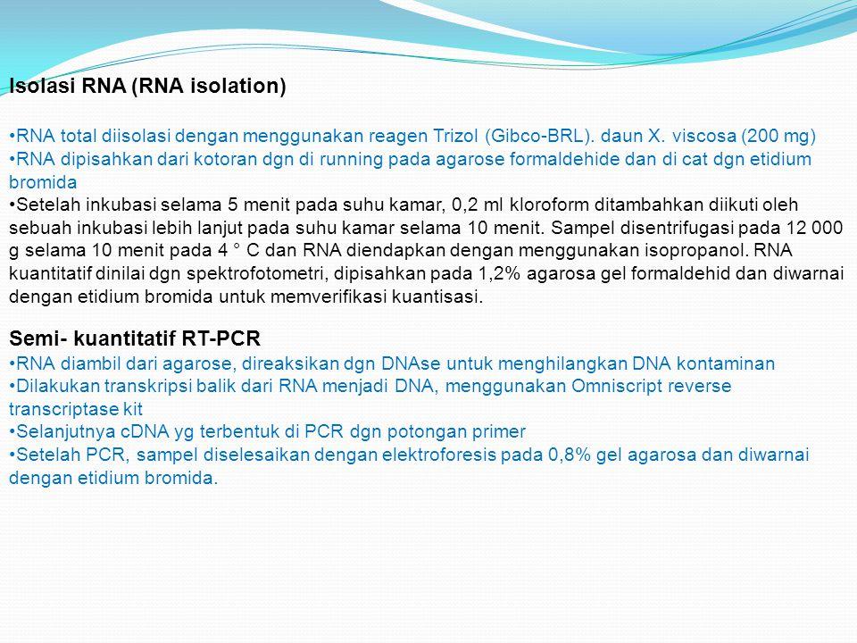 Isolasi RNA (RNA isolation) RNA total diisolasi dengan menggunakan reagen Trizol (Gibco-BRL). daun X. viscosa (200 mg) RNA dipisahkan dari kotoran dgn