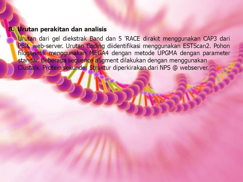 8.Urutan perakitan dan analisis Urutan dari gel diekstrak Band dan 5 RACE dirakit menggunakan CAP3 dari PBIL web-server.