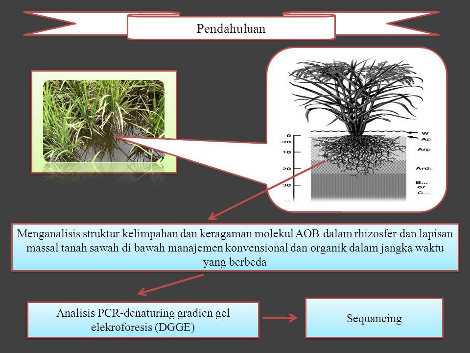 Pendahuluan Menganalisis struktur kelimpahan dan keragaman molekul AOB dalam rhizosfer dan lapisan massal tanah sawah di bawah manajemen konvensional