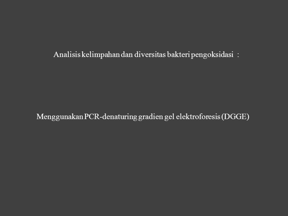 Analisis kelimpahan dan diversitas bakteri pengoksidasi : Menggunakan PCR-denaturing gradien gel elektroforesis (DGGE)