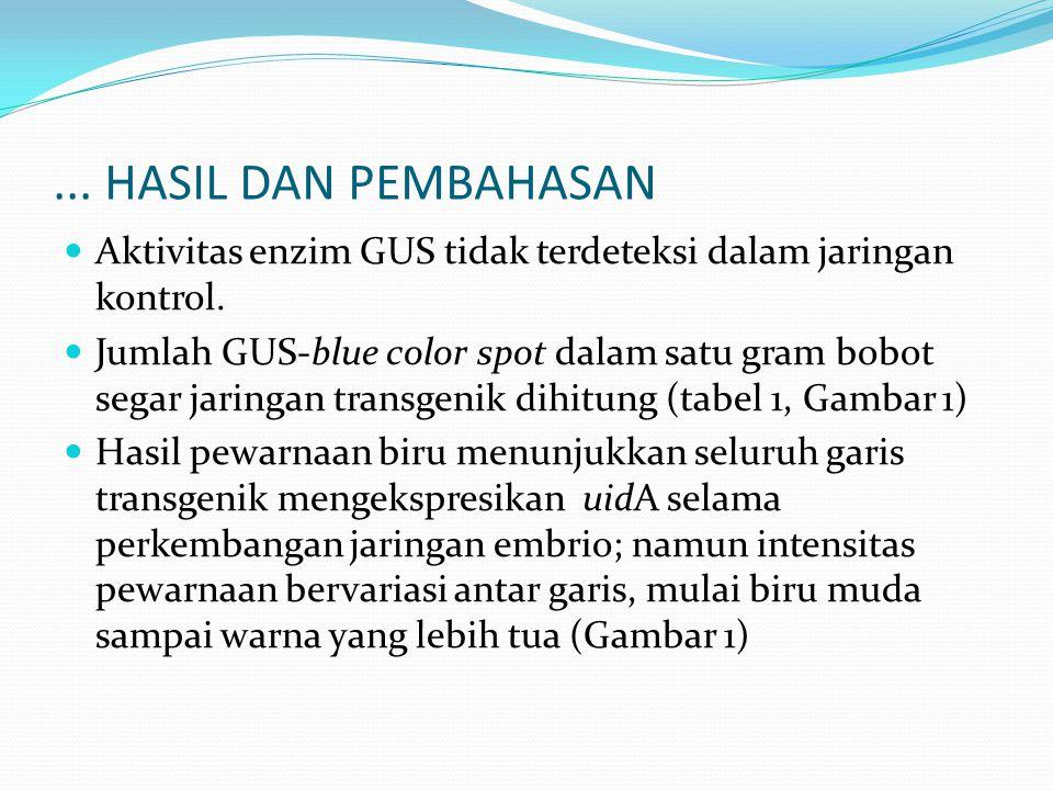 Aktivitas enzim GUS tidak terdeteksi dalam jaringan kontrol. Jumlah GUS-blue color spot dalam satu gram bobot segar jaringan transgenik dihitung (tabe