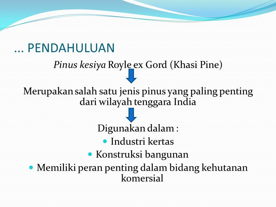... PENDAHULUAN Pinus kesiya Royle ex Gord (Khasi Pine) Merupakan salah satu jenis pinus yang paling penting dari wilayah tenggara India Digunakan dal