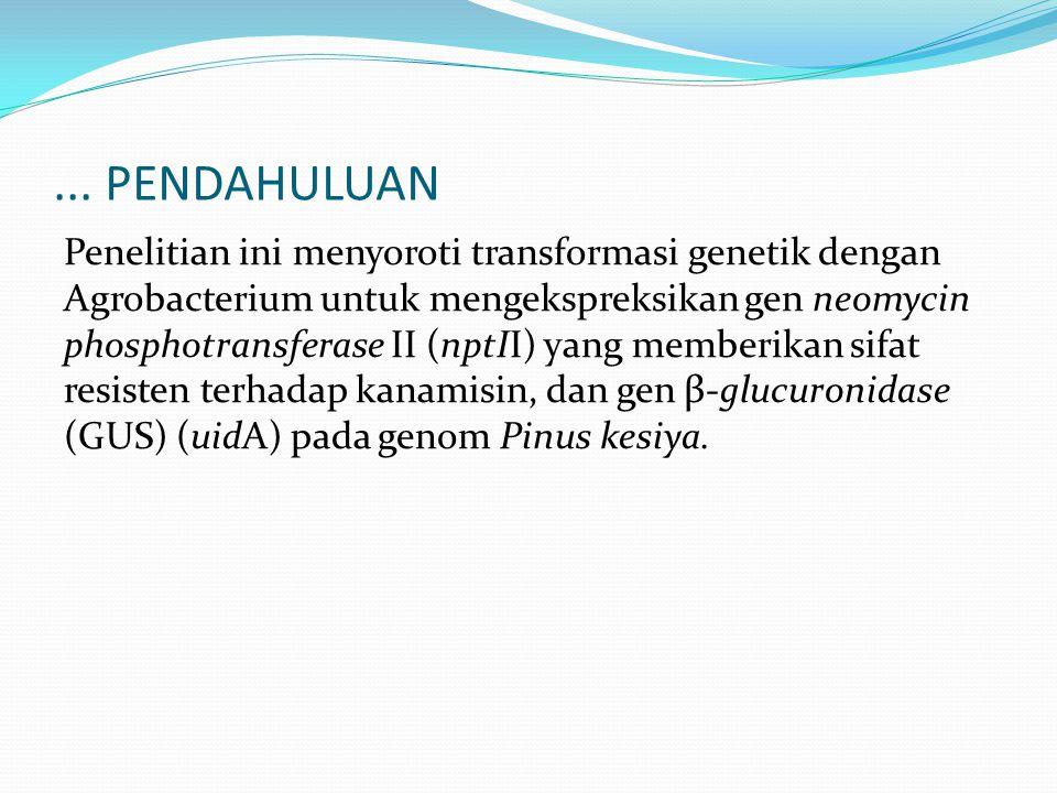 ... PENDAHULUAN Penelitian ini menyoroti transformasi genetik dengan Agrobacterium untuk mengekspreksikan gen neomycin phosphotransferase II (nptII) y