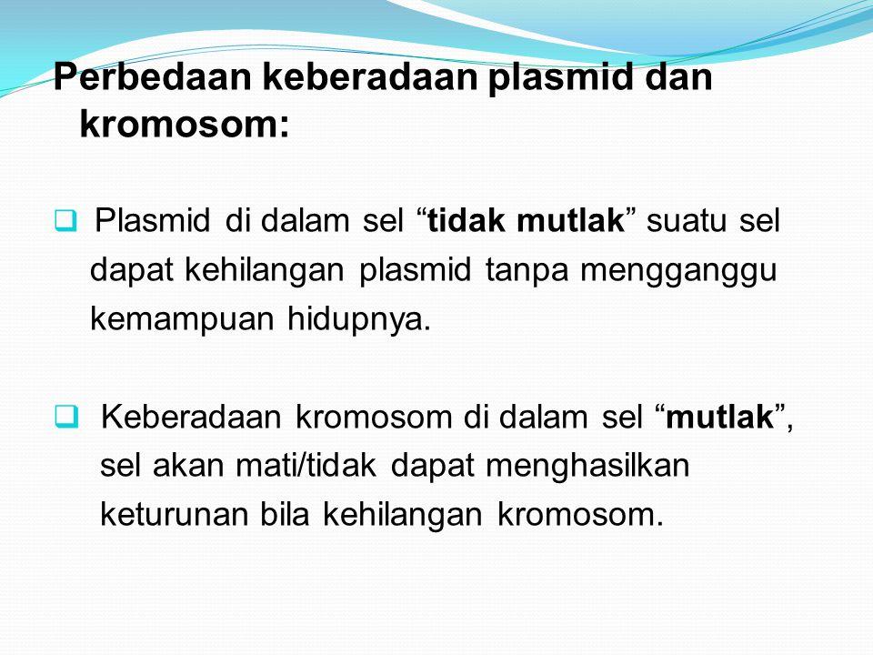 "Perbedaan keberadaan plasmid dan kromosom:  Plasmid di dalam sel ""tidak mutlak"" suatu sel dapat kehilangan plasmid tanpa mengganggu kemampuan hidupny"