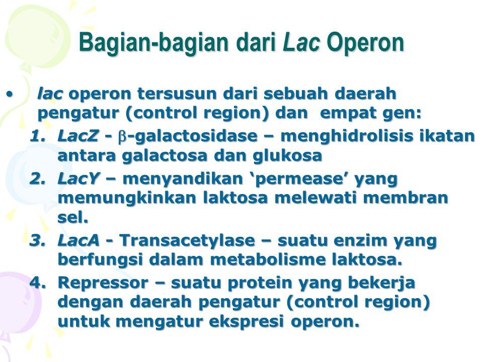 Bagian-bagian dari Lac Operon lac operon tersusun dari sebuah daerah pengatur (control region) dan empat gen:lac operon tersusun dari sebuah daerah pe