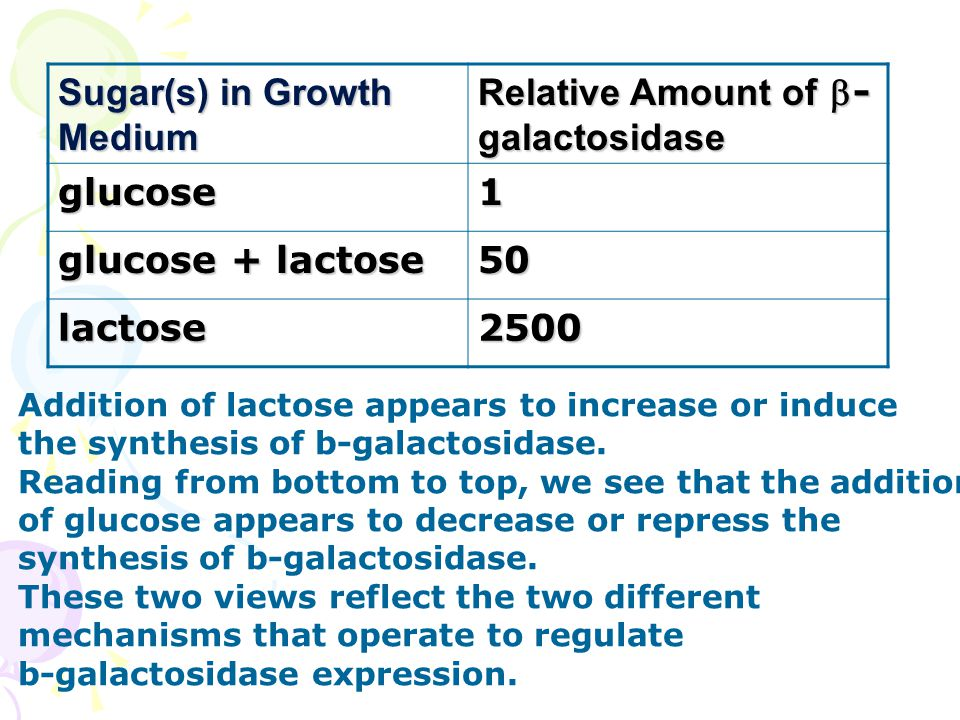 Sugar(s) in Growth Medium Relative Amount of - galactosidase glucose1 glucose + lactose 50 lactose2500 Addition of lactose appears to increase or induce the synthesis of b-galactosidase.