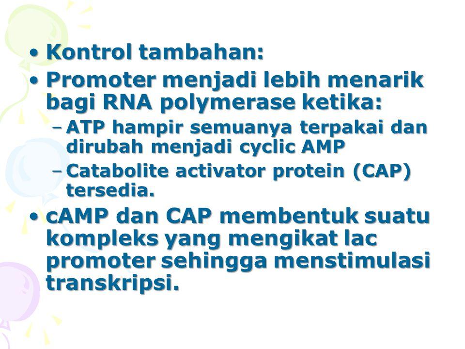 Kontrol tambahan:Kontrol tambahan: Promoter menjadi lebih menarik bagi RNA polymerase ketika:Promoter menjadi lebih menarik bagi RNA polymerase ketika