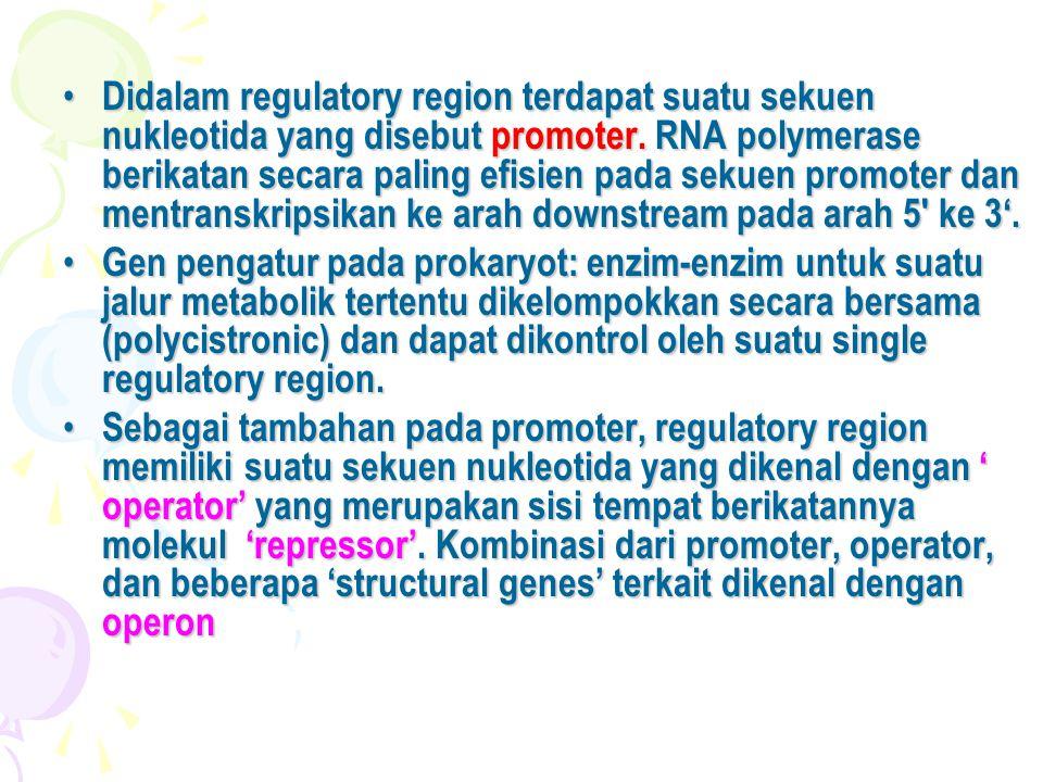 Didalam regulatory region terdapat suatu sekuen nukleotida yang disebut promoter. RNA polymerase berikatan secara paling efisien pada sekuen promoter