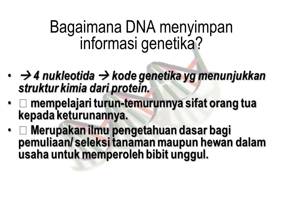 Bagaimana DNA menyimpan informasi genetika?  4 nukleotida  kode genetika yg menunjukkan struktur kimia dari protein.  4 nukleotida  kode genetika