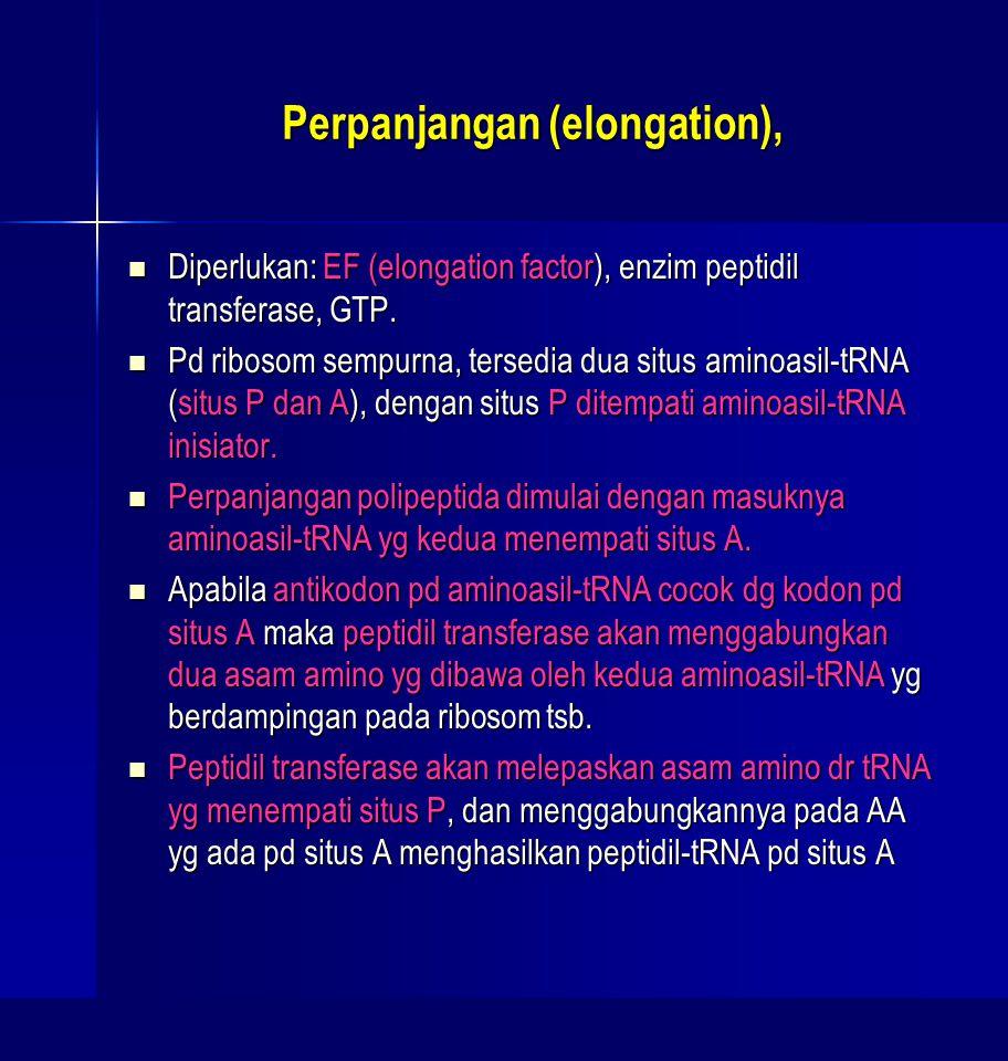 Perpanjangan (elongation), Diperlukan: EF (elongation factor), enzim peptidil transferase, GTP. Diperlukan: EF (elongation factor), enzim peptidil tra