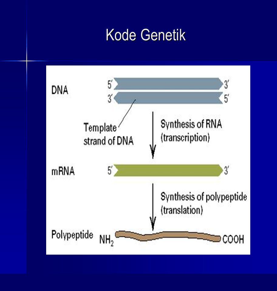 Perpanjangan (elongation), Diperlukan: EF (elongation factor), enzim peptidil transferase, GTP.