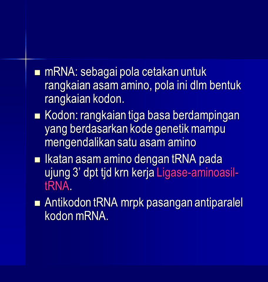 mRNA: sebagai pola cetakan untuk rangkaian asam amino, pola ini dlm bentuk rangkaian kodon. mRNA: sebagai pola cetakan untuk rangkaian asam amino, pol