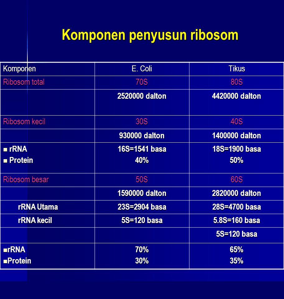 Komponen penyusun ribosom Komponen E. Coli Tikus Ribosom total 70S80S 2520000 dalton 4420000 dalton Ribosom kecil 30S40S 930000 dalton 1400000 dalton
