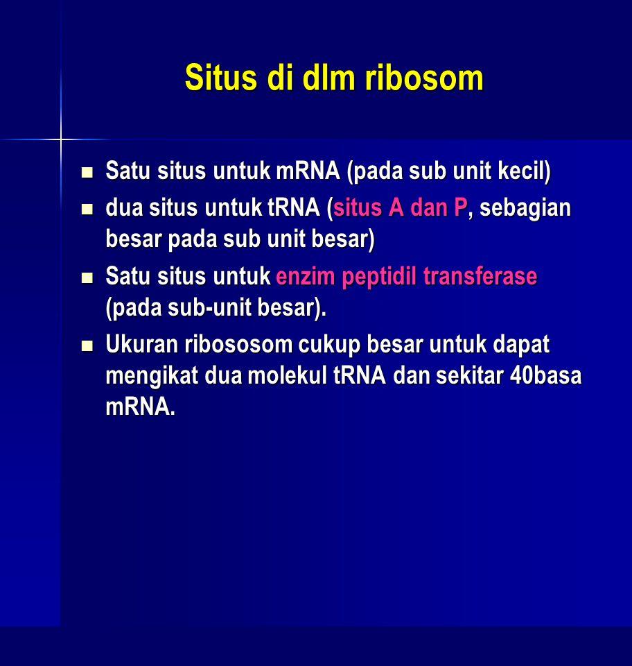 Situs di dlm ribosom Satu situs untuk mRNA (pada sub unit kecil) Satu situs untuk mRNA (pada sub unit kecil) dua situs untuk tRNA (situs A dan P, seba