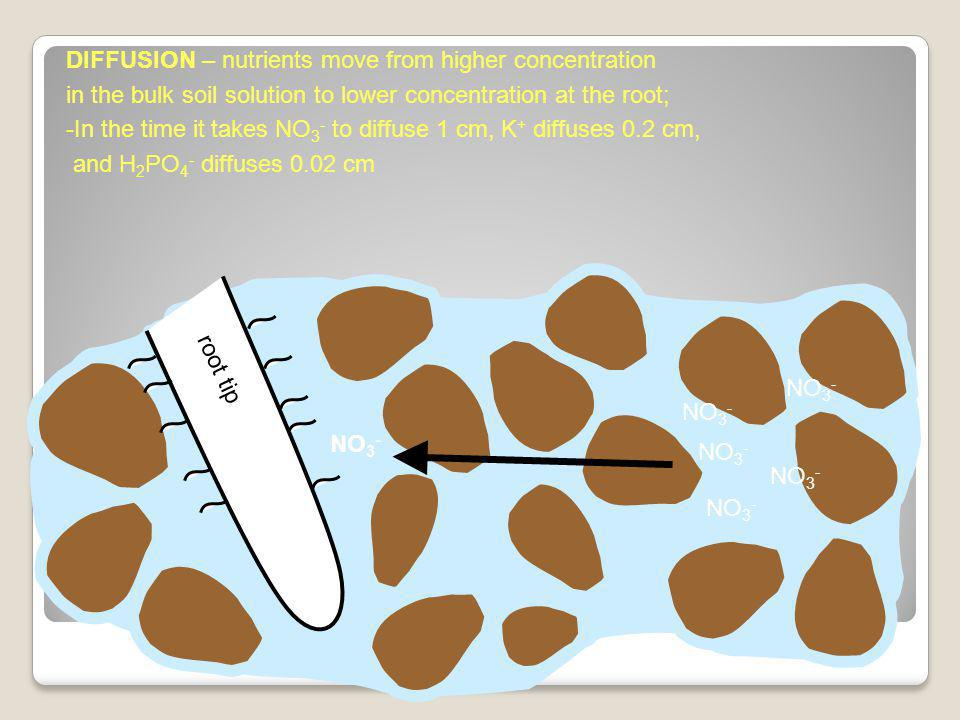 root tip DIFFUSION – nutrients move from higher concentration in the bulk soil solution to lower concentration at the root; -In the time it takes NO 3