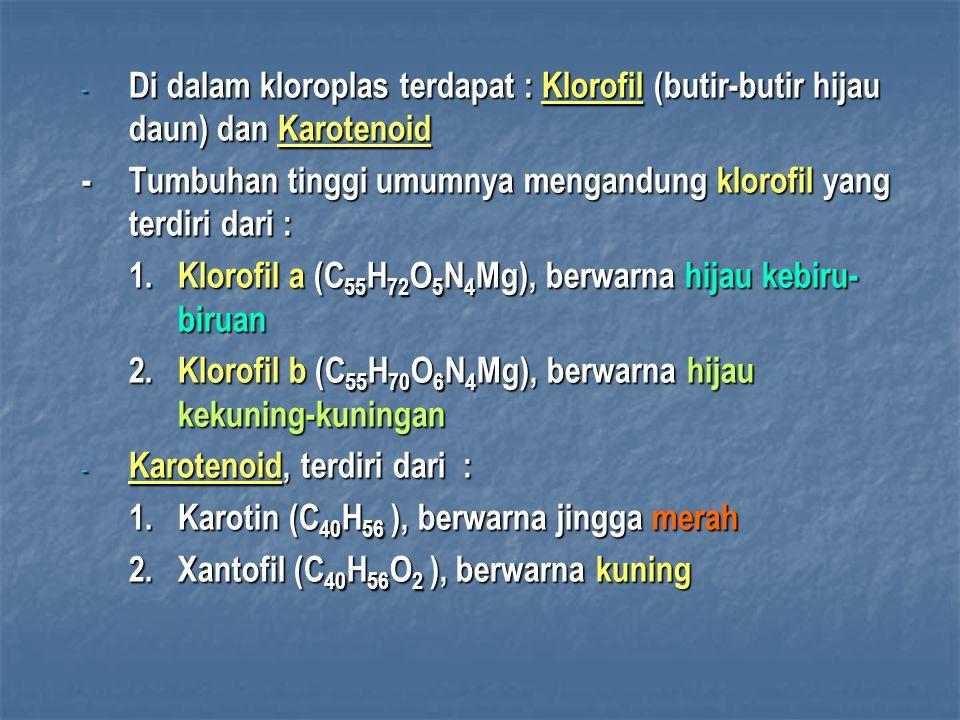 - Di dalam kloroplas terdapat : Klorofil (butir-butir hijau daun) dan Karotenoid -Tumbuhan tinggi umumnya mengandung klorofil yang terdiri dari : 1.Klorofil a (C 55 H 72 O 5 N 4 Mg), berwarna hijau kebiru- biruan 2.Klorofil b (C 55 H 70 O 6 N 4 Mg), berwarna hijau kekuning-kuningan - Karotenoid, terdiri dari : 1.Karotin (C 40 H 56 ), berwarna jingga merah 2.Xantofil (C 40 H 56 O 2  ), berwarna kuning
