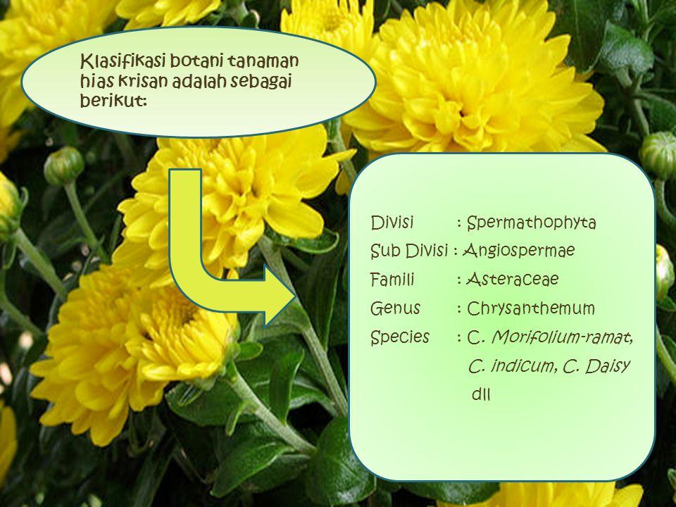 Divisi : Spermathophyta Sub Divisi : Angiospermae Famili : Asteraceae Genus : Chrysanthemum Species : C. Morifolium-ramat, C. indicum, C. Daisy dll Kl