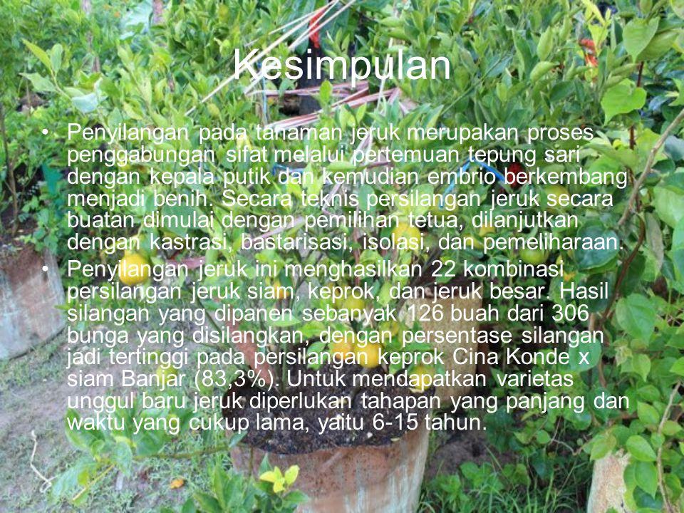 Kesimpulan Penyilangan pada tanaman jeruk merupakan proses penggabungan sifat melalui pertemuan tepung sari dengan kepala putik dan kemudian embrio be