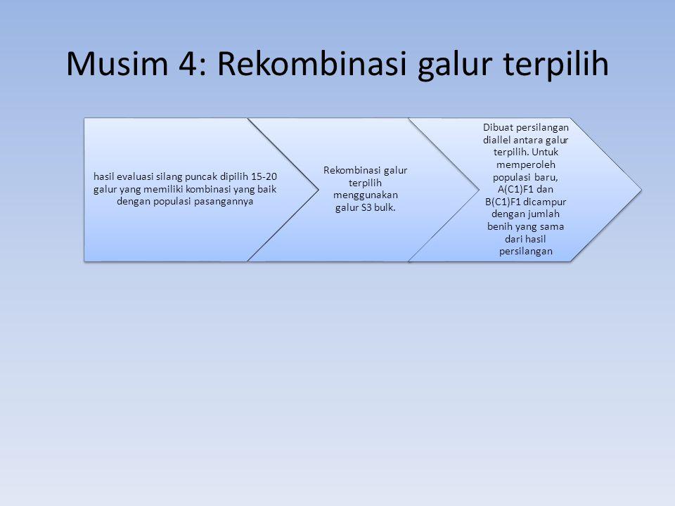 Musim 4: Rekombinasi galur terpilih hasil evaluasi silang puncak dipilih 15-20 galur yang memiliki kombinasi yang baik dengan populasi pasangannya Rek