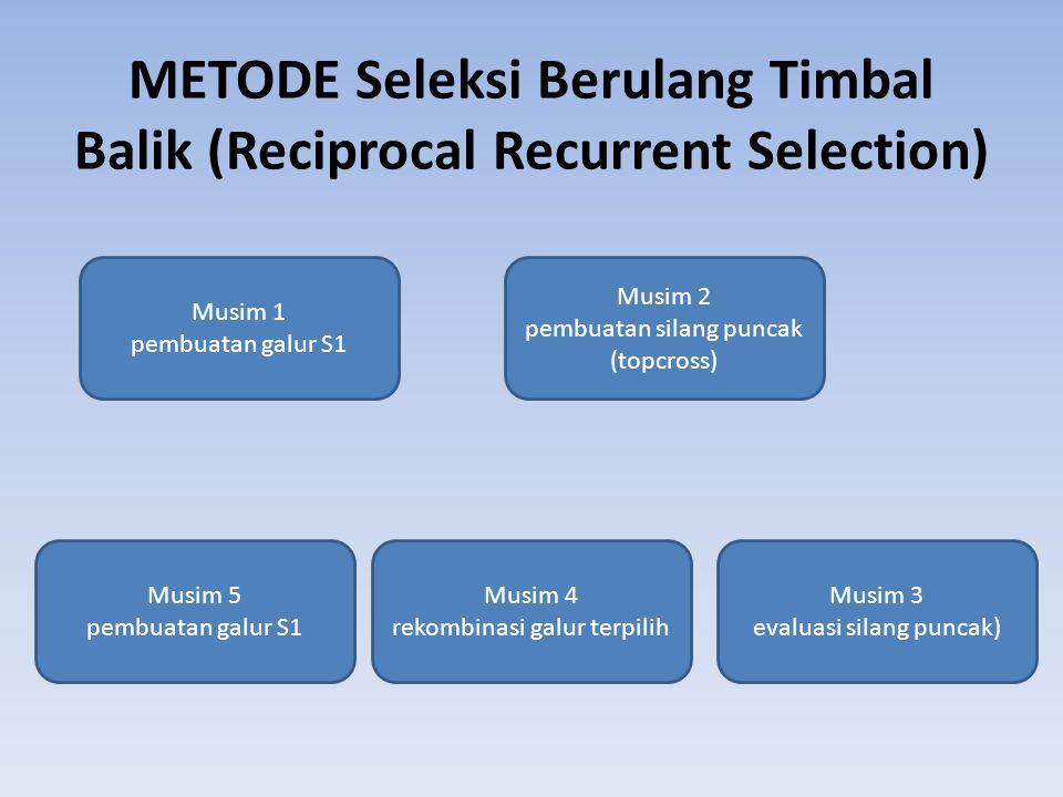 METODE Seleksi Berulang Timbal Balik (Reciprocal Recurrent Selection) Musim 1 pembuatan galur S1 Musim 2 pembuatan silang puncak (topcross) Musim 3 ev