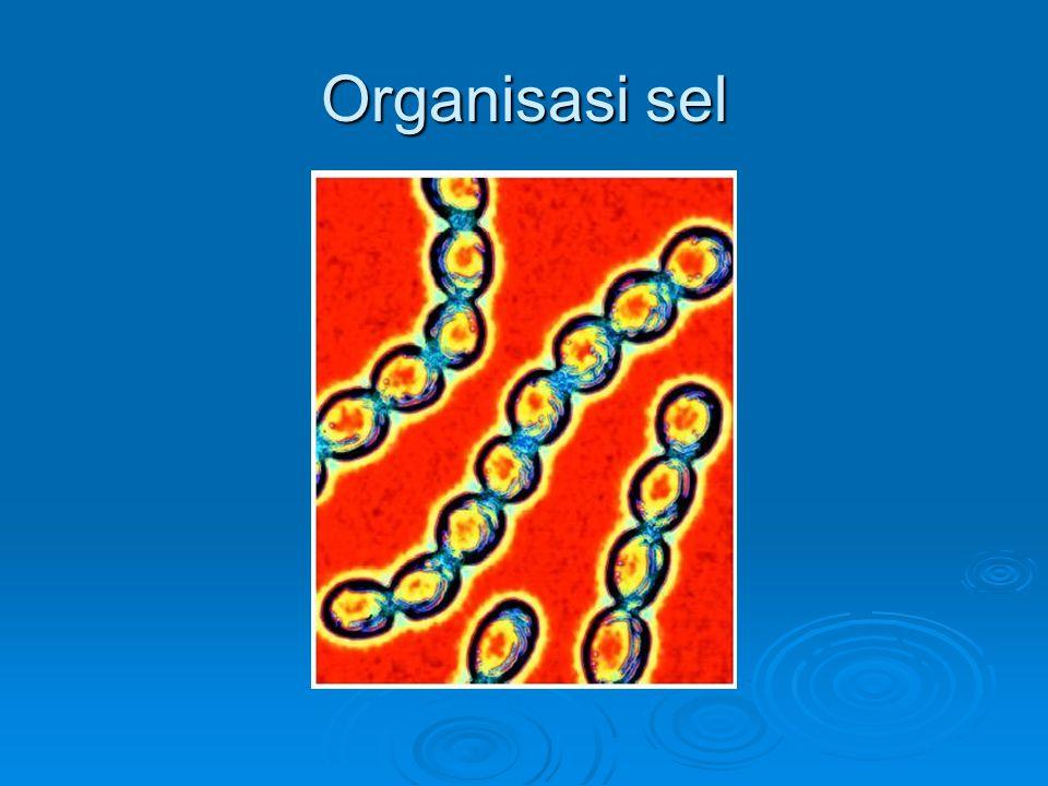 Organisasi sel