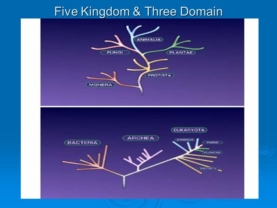 Tree of Life: Three Domain