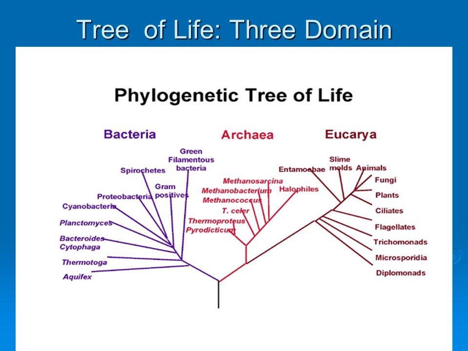 Molecular systematics  Molecular systematics (phylogenetic): nucleic acids analysis (evolutionary relationships: phylogeny tree)  DNA sequencing (16S, 18S rDNA)  DNA-DNA hybridisation  Molecular fingerprinting