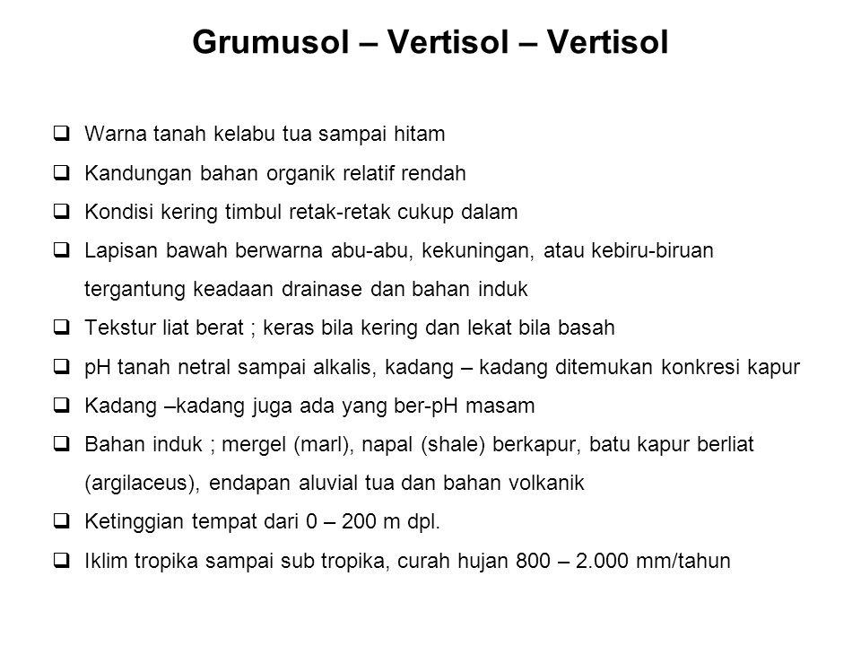 Grumusol – Vertisol – Vertisol  Warna tanah kelabu tua sampai hitam  Kandungan bahan organik relatif rendah  Kondisi kering timbul retak-retak cuku