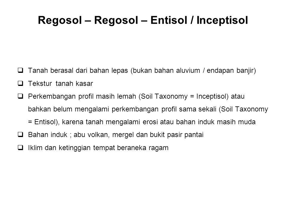 Regosol – Regosol – Entisol / Inceptisol  Tanah berasal dari bahan lepas (bukan bahan aluvium / endapan banjir)  Tekstur tanah kasar  Perkembangan